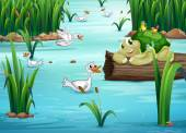 Animals and pond — Stock Vector