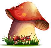 Closeup mushroom — Stock Vector
