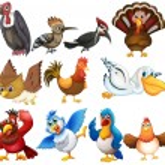 Bird collections — Stock Vector #52593313