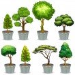 Potted plants — Stock Vector #52594005