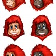Heads of chimpanzees — Stock Vector #52859135