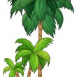 A palm tree — Stock Vector #52859265