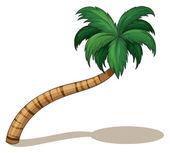 A coconut tree — Stock Vector