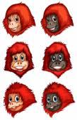 Heads of chimpanzees — Stockvector