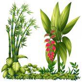 Ornamental plants — Stock Vector