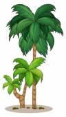 Un albero di palma — Vettoriale Stock