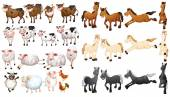 Farm animals — Stock Vector