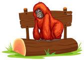 Orangutan — Stock Vector