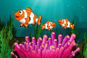 Clownfish — Stock Vector