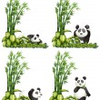 Panda and bamboo — Stock Vector #54092031
