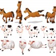Farm animals — Stock Vector #54092429