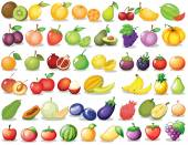 Fruit set — Stock Vector