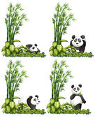 Panda and bamboo — Stock Vector