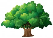 Tree Illustration — Stock Vector