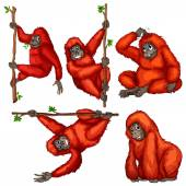 Orangutan Illustration — Stock Vector