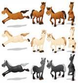 Horse set Illustration — Stock Vector