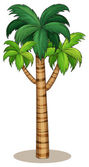 Palm tree Illustration — Stock Vector