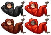 Orangutans — Stock Vector
