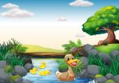 Ducks and river — Stock Vector