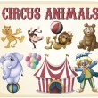 Circus animals — Stock Vector #58547667