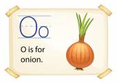 A letter O for onion — Stock Vector
