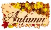An Autumn template — Stock Vector