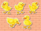 Happy ducklings — Stock Vector
