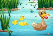 Ducks and pond — Stock Vector