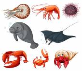 Sea animals — Stockvektor