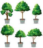 Plante — Vecteur