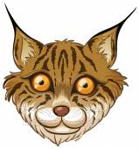 Lynx — Stock Vector