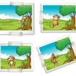 Photographs and monkeys — Stock Vector #63876109