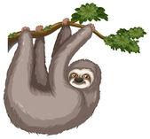 Sloth — Stock Vector