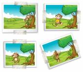 Photographs and monkeys — Stock Vector