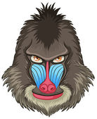 Mandrill baboon — Stock Vector
