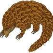 Pangolin — Stock Vector #65413925