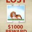 Lost Dog — Stock Vector #65414303