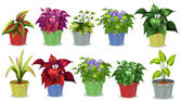 Potted plants — Stock Vector