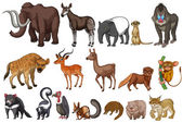 Rare animals — Stock Vector