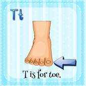 Flashcard letter T is for toe. — Wektor stockowy