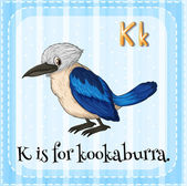 Flashcard letter K is for kookaburra. — Stock Vector