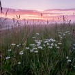 Sunrise above field with chamomiles — Stock Photo #58403949