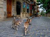 Icheri Sheher (Old Town) of Baku — Stockfoto