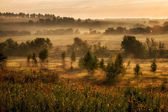 Landscape with fog at the morning. — Stock Photo