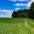 Road through field. — Stock Photo #58441473