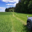 Road through field. — Stock Photo #58441475