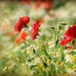 Poppies and daisy flowers — Stock Photo #58443093