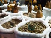 Uzbek spices — Стоковое фото
