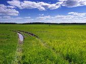 Road through field. — Stock Photo