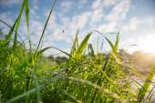 Grass on a dew. With blurred landscape at background — Stock Photo